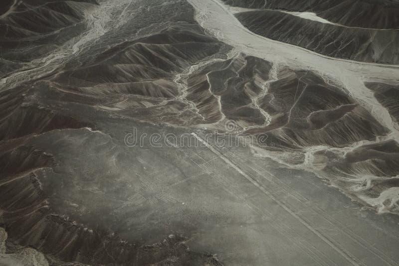 Le linee famose di Nazca nel Perù, qui potete vedere la figura di un colibrì immagine stock