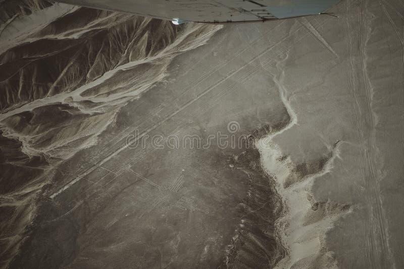 Le linee famose di Nazca nel Per?, qui potete vedere la figura di un colibr? immagini stock