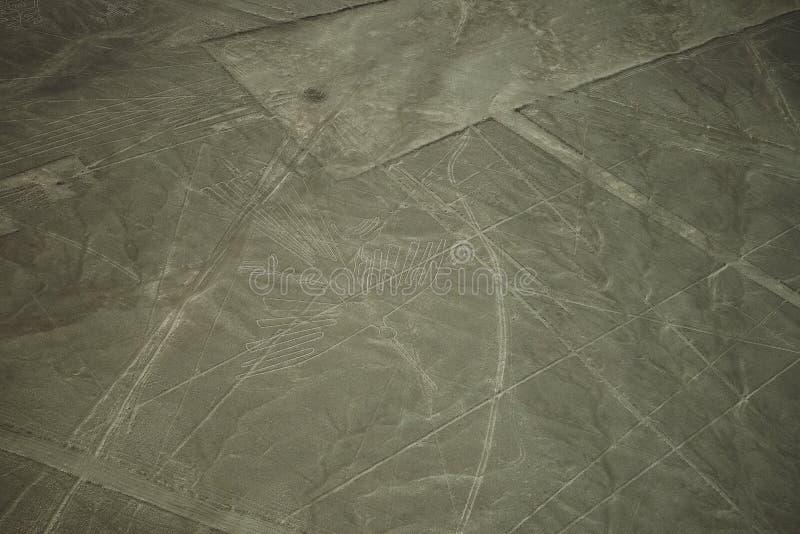 Le linee famose di Nazca nel Per?, qui potete vedere la figura di un condor fotografia stock