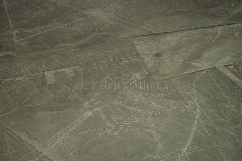 Le linee famose di Nazca nel Per?, qui potete vedere la figura di un condor immagine stock