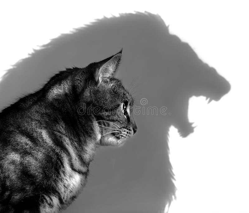 Le lion en dedans images libres de droits