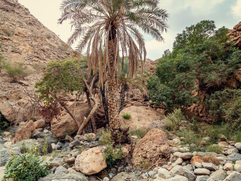 Le lit de la rivière desséché a appelé l'oued en Asie, dans les périphéries de Muscat, l'Oman photo libre de droits