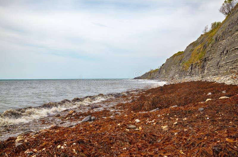 Le littoral de la plage de Monmouth avec les falaises des roches liassiques à la baie de Chippel Dorset occidental l'angleterre image stock