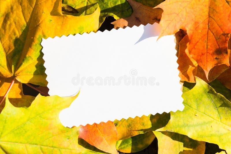 Le livre blanc pour le texte avec l'érable jaune part avec l'espace de copie images stock