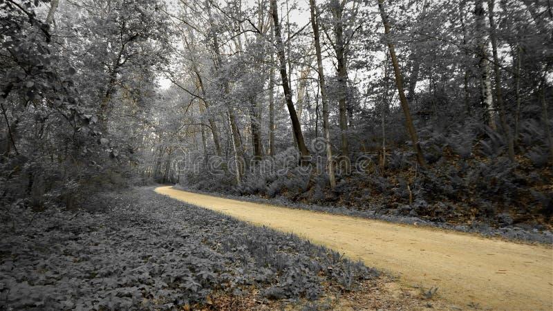 Le long d'Elroy Sparta Trail photographie stock