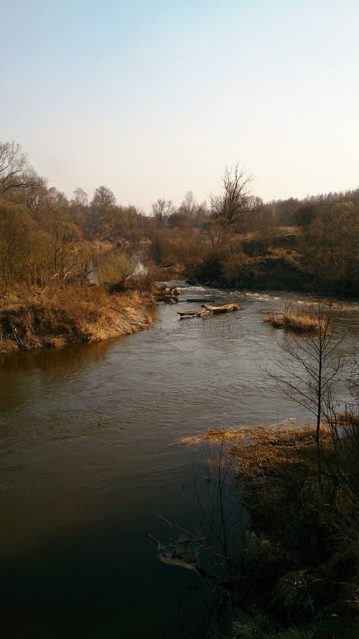 Le long des bouleaux étroits, la rivière image libre de droits