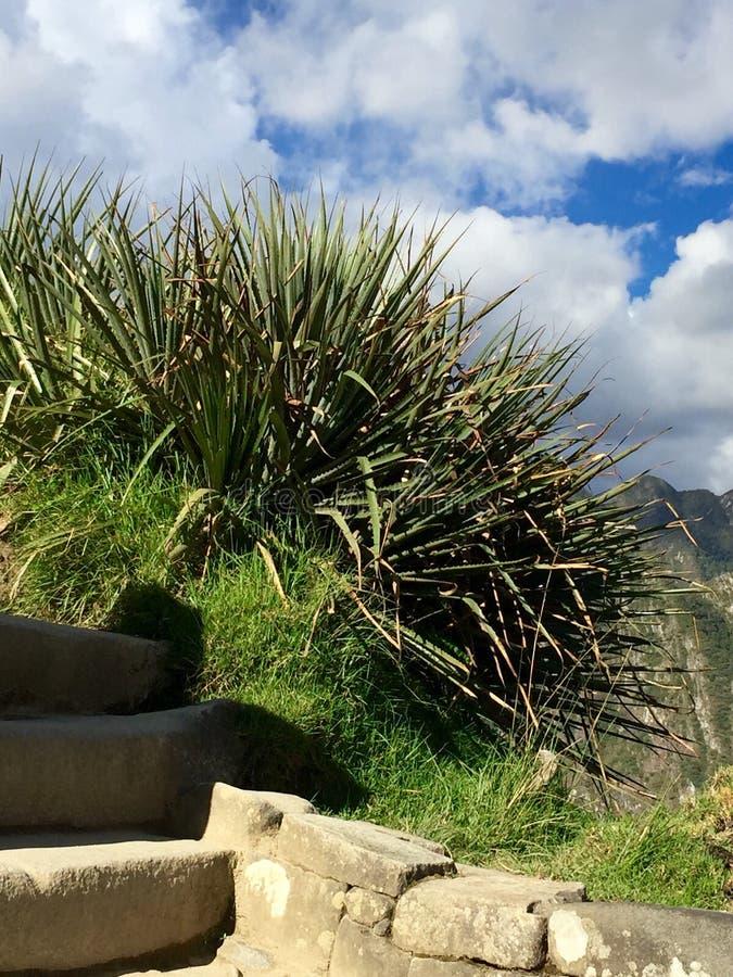 Le long du journal d'Inca image stock