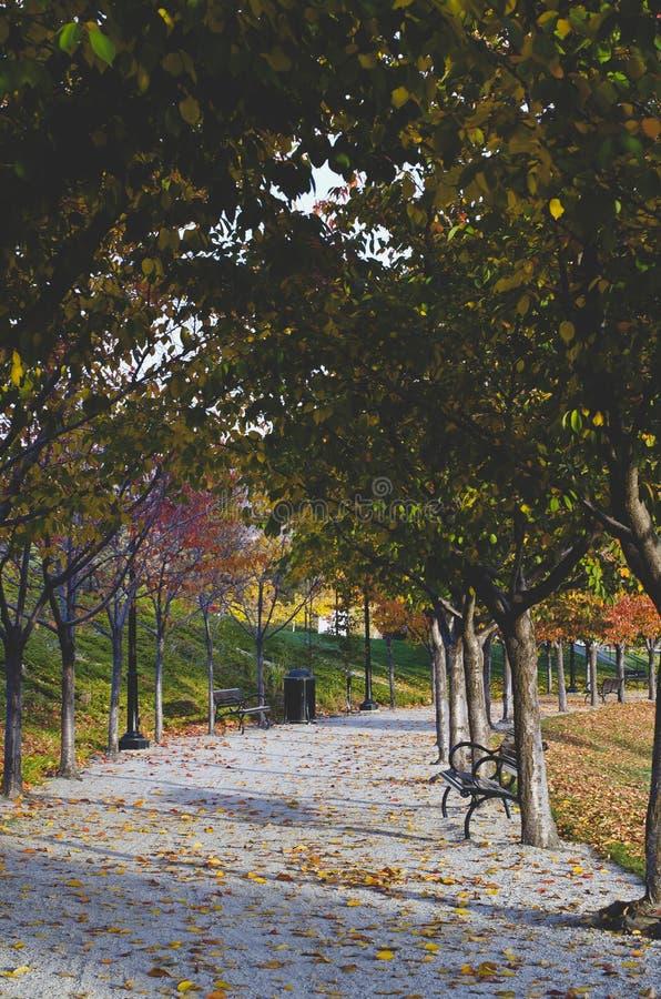 Le long passage couvert de recourbement sous les arbres photo libre de droits