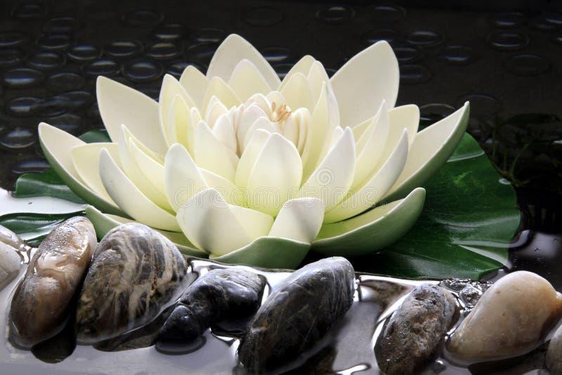 Le lotus artificiel   photo libre de droits