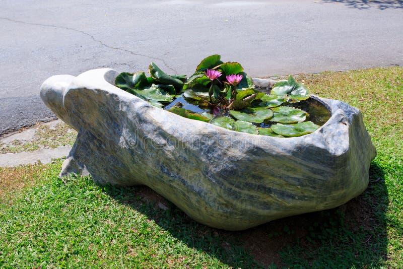 Le lotus planté par étang de roche décorent dans le jardin extérieur images stock