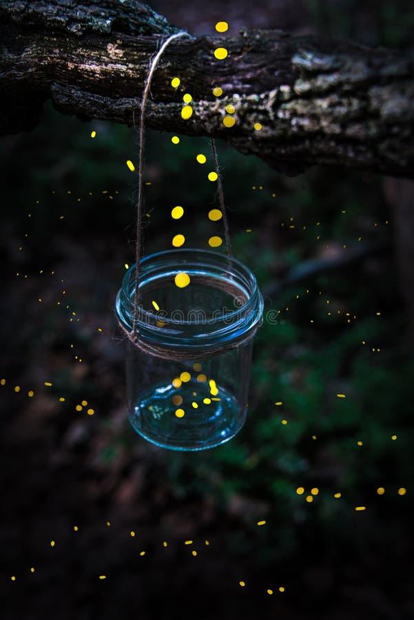 Le lucciole che volano a partire da un barattolo hanno appeso su un albero nella foresta immagine stock libera da diritti