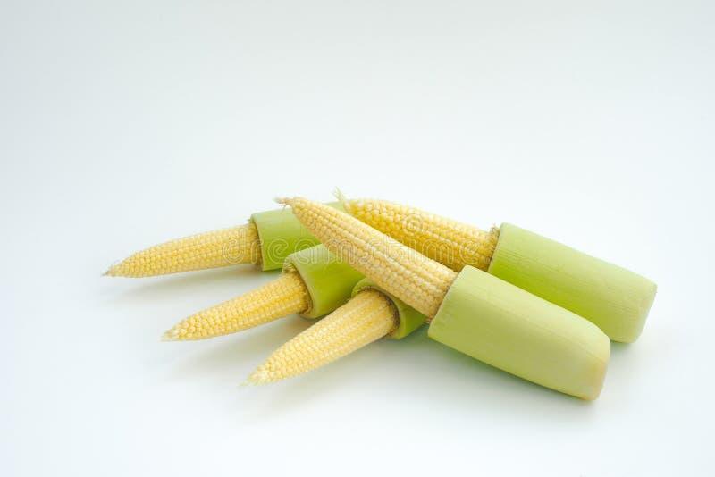 Le maïs de bébé d'isolement image stock