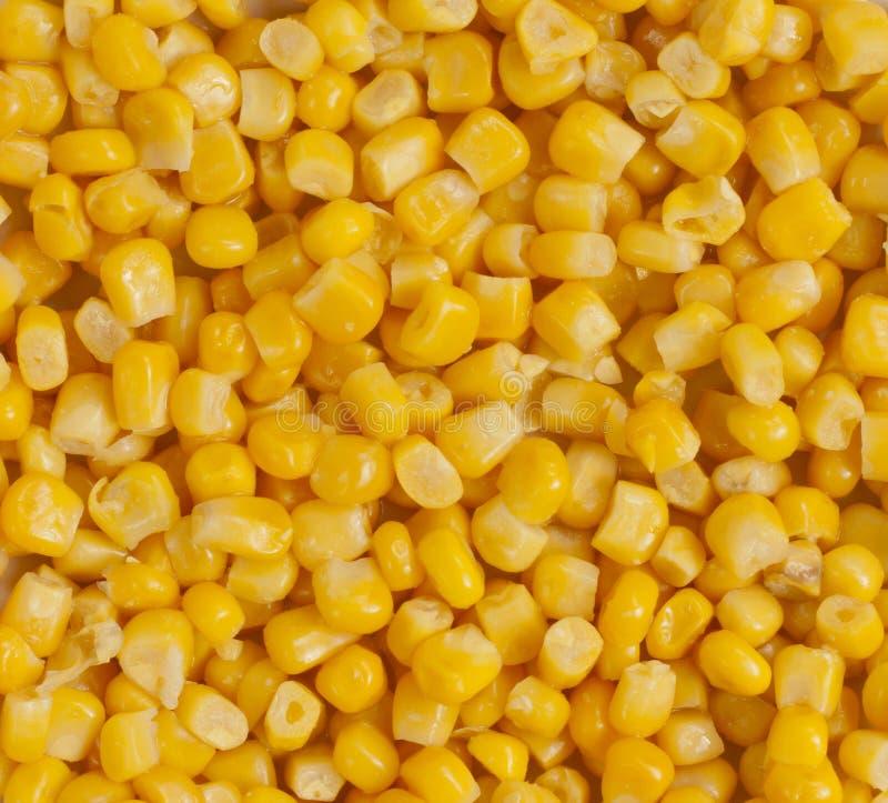 Le maïs injecte le plan rapproché photo stock