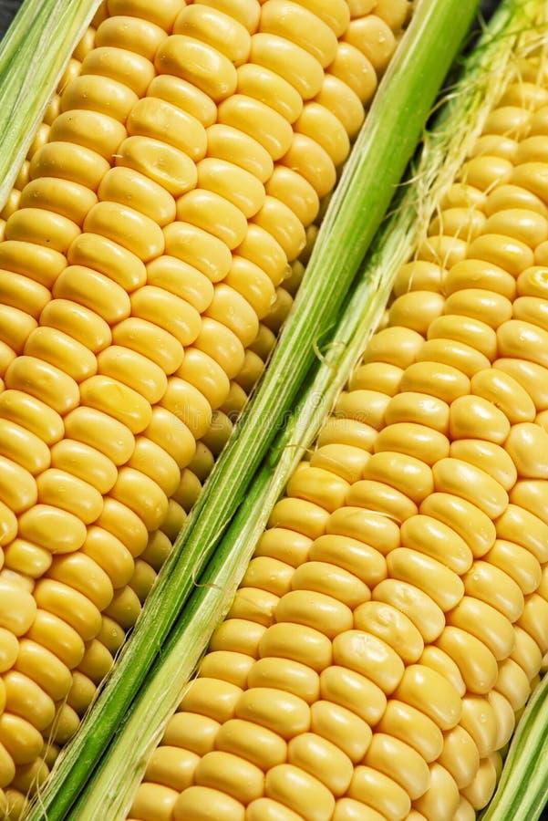 Le maïs organique juteux frais, se ferment, foyer sélectif photo libre de droits
