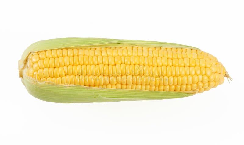 Le maïs sur le banc images libres de droits