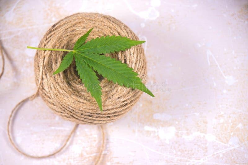 Le macro détail de la ficelle de fibre de chanvre et les cannabis poussent des feuilles - la marijuana h image stock