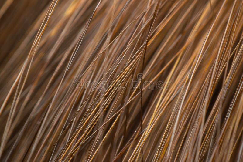 Le macro des cheveux accentue le brun photo libre de droits