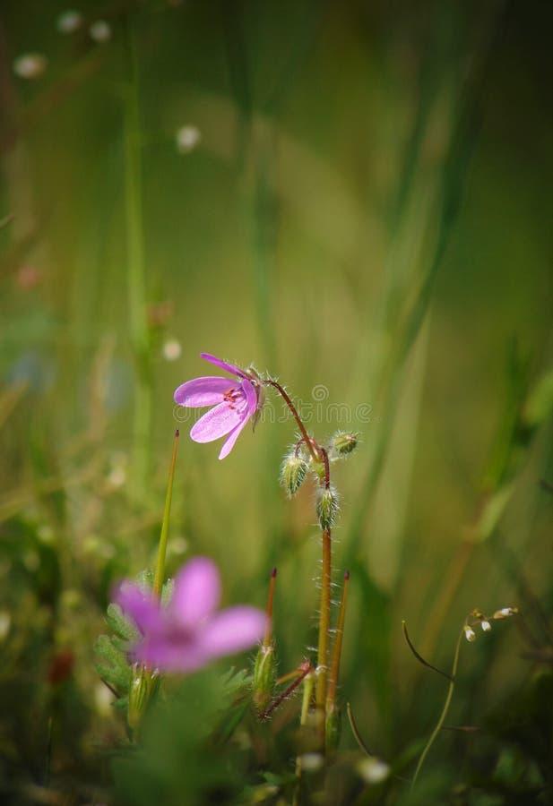 Le macro fond de photo avec du bois et le champ décoratifs d'été fleurit image stock