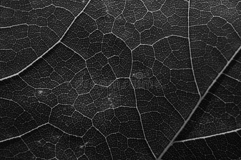 Le macro laisse la texture de fond, noire et blanche photographie stock