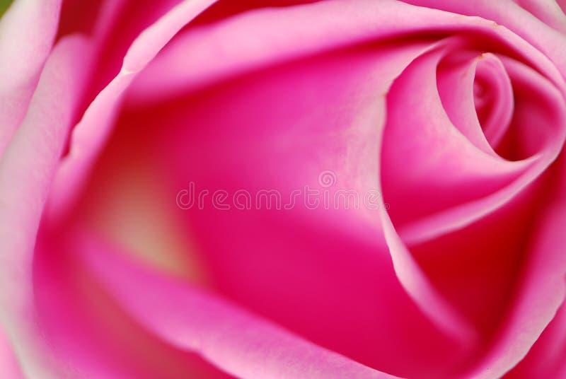 Le macro rose a monté photo libre de droits