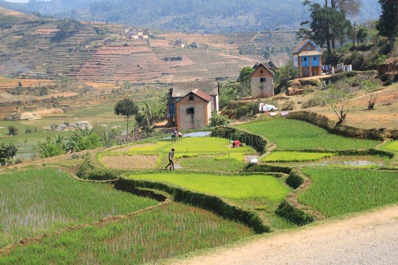 Le Madagascar photos stock
