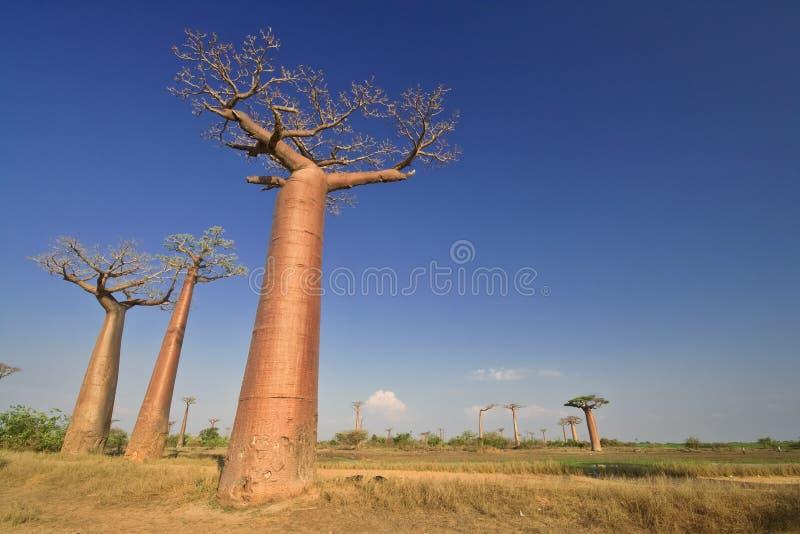 le Madagascar image stock