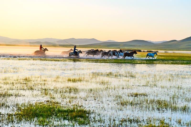 Le manada courant dans le lever de soleil de l'eau photographie stock libre de droits