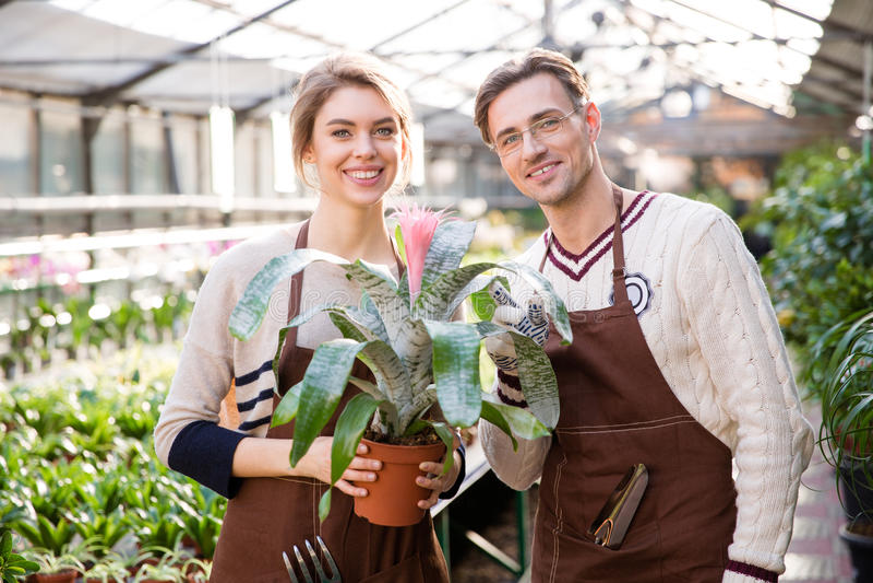 Le manblomsterhandlaren och kvinnaträdgårdsmästaren som rymmer härliga rosa färger, blomma royaltyfria bilder