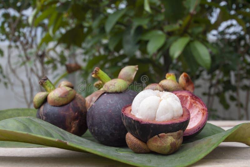 Le mangoustan est la reine des fruits Goût doux délicieux image stock