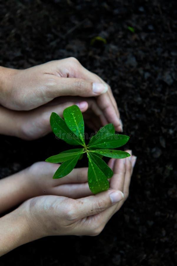 Le mani bambino e le plantule della tenuta della madre sul suolo posteriore nel parco naturale della crescita della pianta per ri fotografie stock