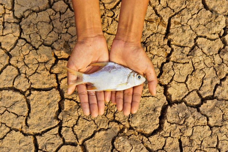 Le mani che tengono il pesce sono morto su terra incrinata immagine stock