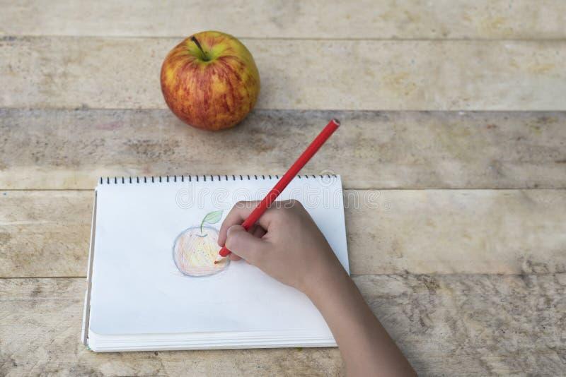 Le mani dei bambini disegnano una mela con le matite colorate Vista superiore fotografia stock libera da diritti