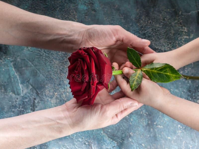 Le mani dei bambini e delle donne tengono una grande rosa Giorno felice del `s della madre tonalità Mani della figlia e della mam fotografie stock libere da diritti