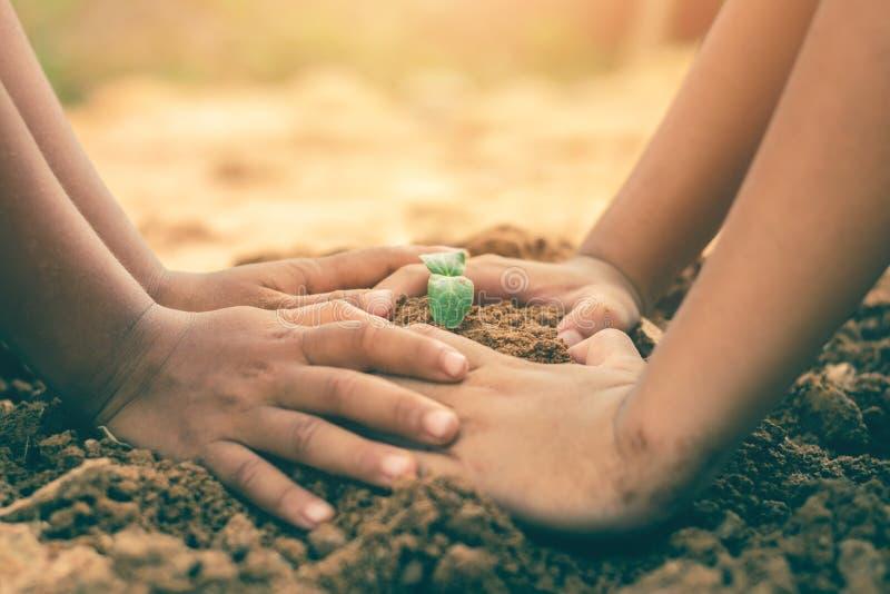 Le mani dei bambini stanno collaborando per coltivare le foreste di nuovo alla natura, concetto della pianta selvatica immagini stock libere da diritti