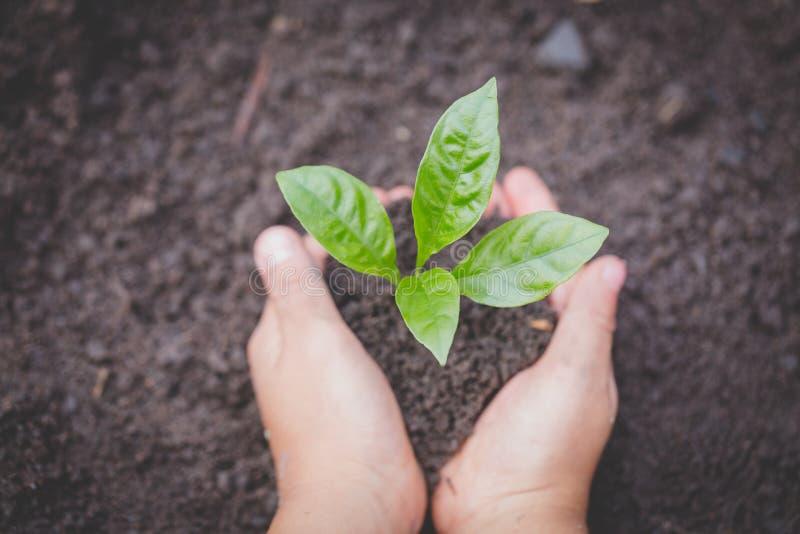Le mani del bambino che tengono e che si preoccupano una giovane pianta verde, piantine stanno sviluppando da suolo abbondante, p fotografia stock