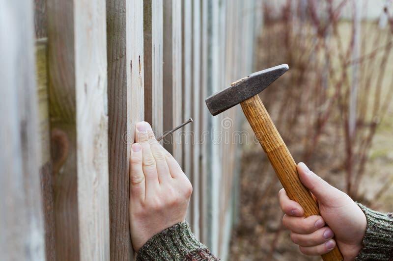 Le mani dell'uomo guidano il chiodo con un martello in recinto di legno fotografia stock libera da diritti