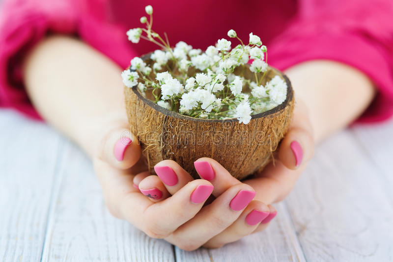 Le mani della donna con la noce di cocco rosa della tenuta del manicure sgusciano in pieno dei fiori fotografie stock