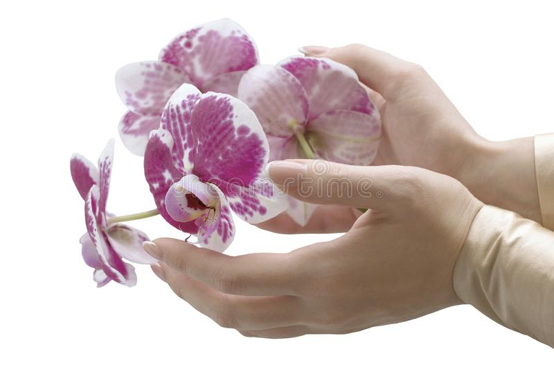 Le mani della donna elegante con l'orchidea fotografia stock