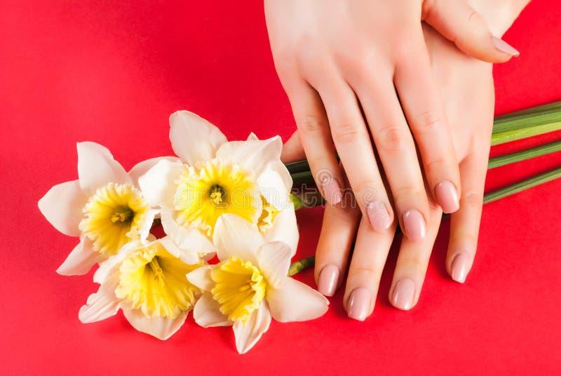 Le mani della ragazza con colore naturale beige dei chiodi sul narciso giallo fiorisce fotografia stock