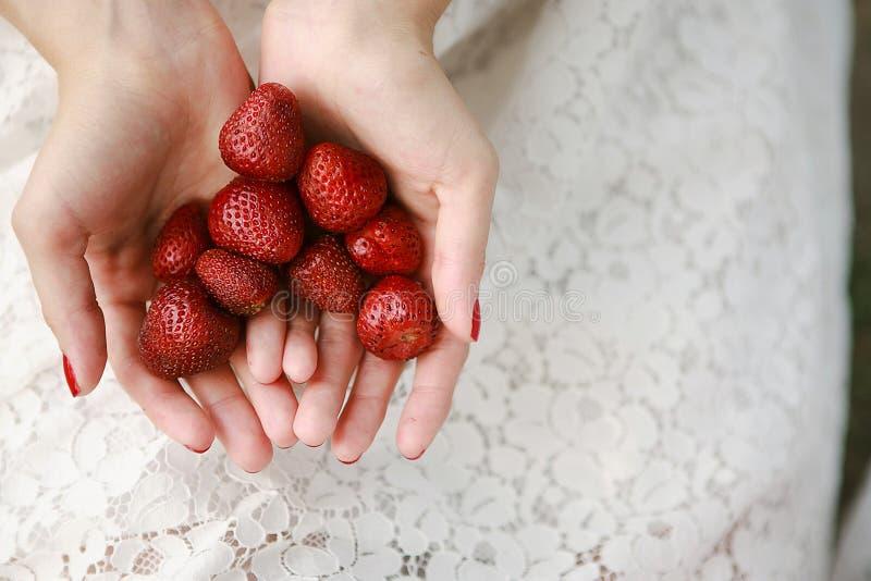 Le mani femminili tengono una manciata di fragole fotografia stock