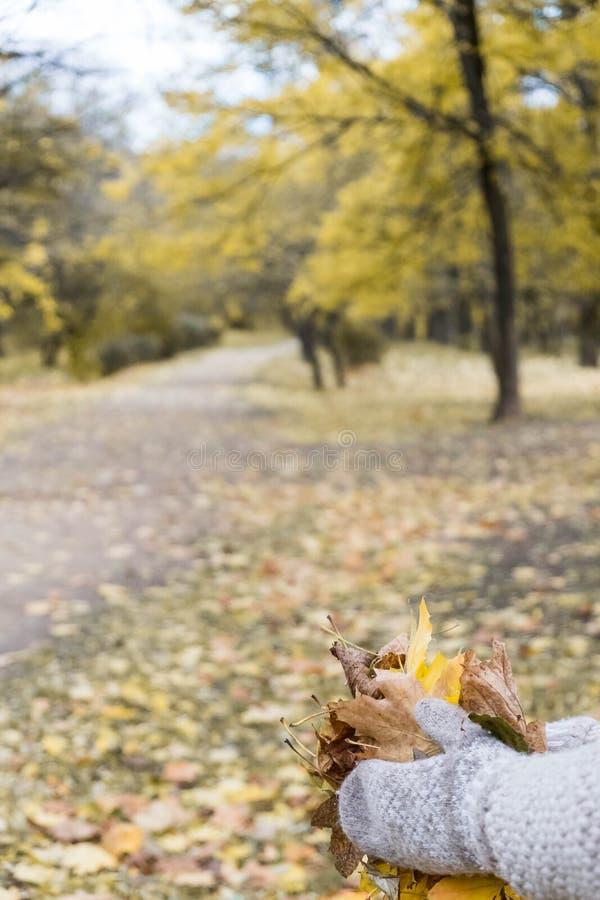 Le mani in guanti con le foglie di acero in autunno parcheggiano fotografia stock libera da diritti