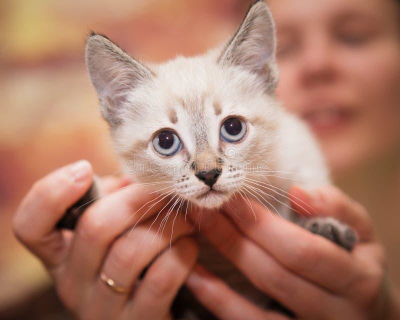 Le mani umane tengono con attenzione un piccolo gattino fotografia stock libera da diritti