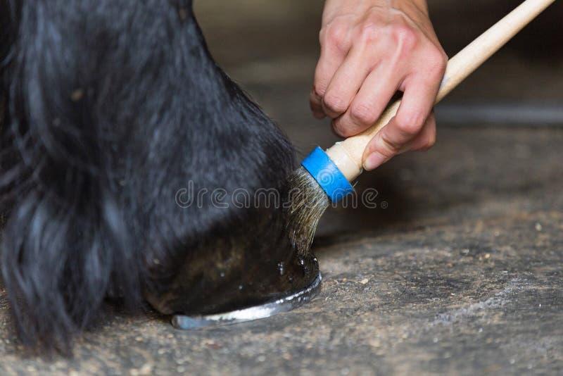 Le maréchal-ferrant polit le horse& x27 ; sabot de s photographie stock libre de droits