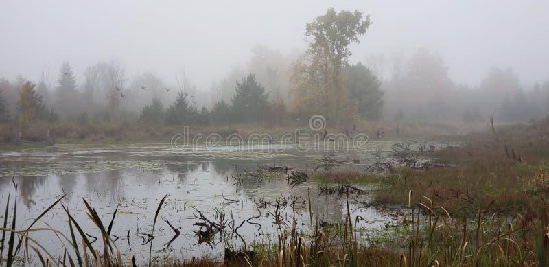 Le marais photo libre de droits