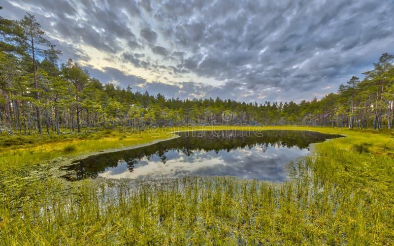 Le marais de forêt en tourbe amarrent à la réserve naturelle de Hokensas photo libre de droits