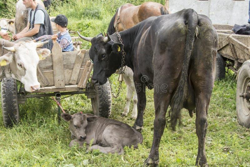 Le marché extérieur animal en Roumanie photos libres de droits