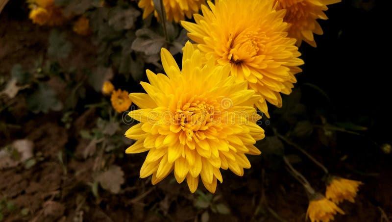Le mariage a monté fleur dans le jardin photographie stock libre de droits