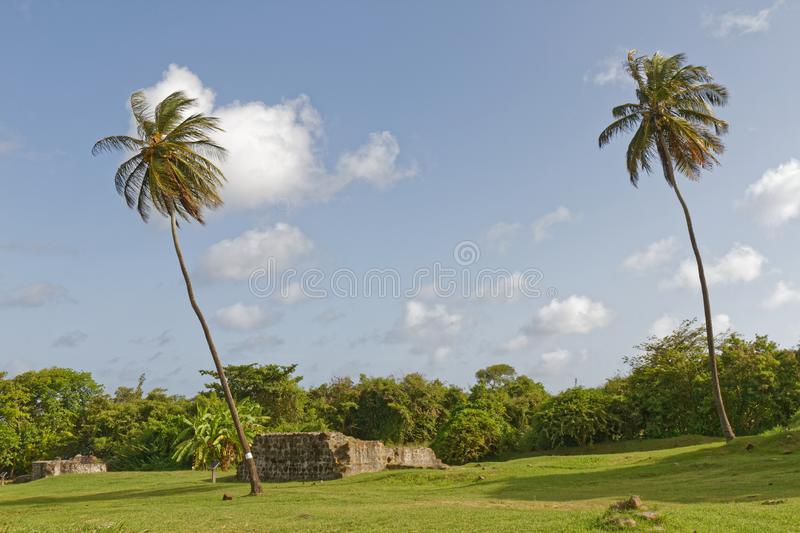 Le Marin, Martinique - Coconut trees and ruins stock photography