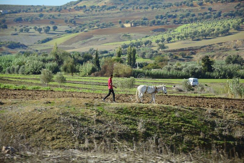 Download Le Maroc, Volubilis, Agriculture Photographie éditorial - Image du afrique, morocco: 76082942