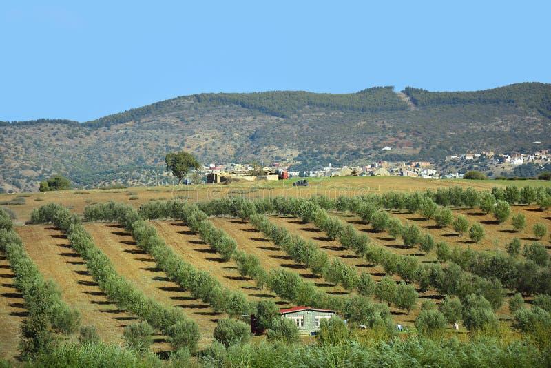 Download Le Maroc, Volubilis ; AGRICULTURE Image stock - Image du rural, règlement: 76082993